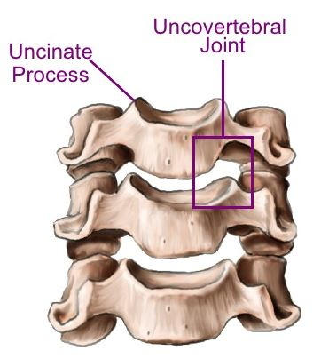 Uncovertebral Joint