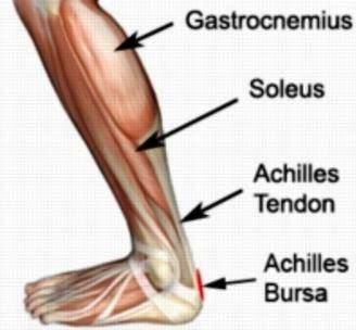 achilles tendinitis anatomy