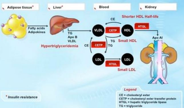 lipids fat metabolism