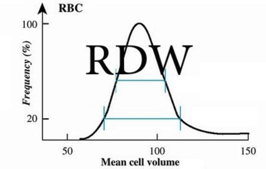 RDW blood Test