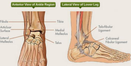 ankle anatomy - sprain, clinical anatomy, fracture, radiology, x-ray, Human Body