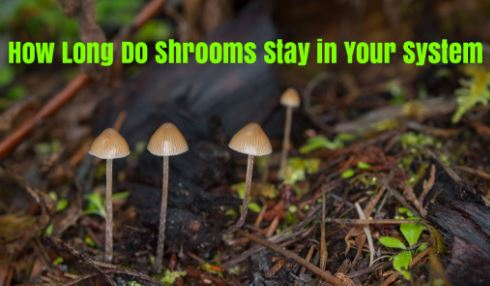 How Long Does Shrooms Stay in System