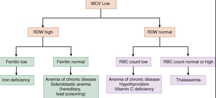Low MCV Differential Diagnosis